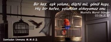 Gönül kuşu