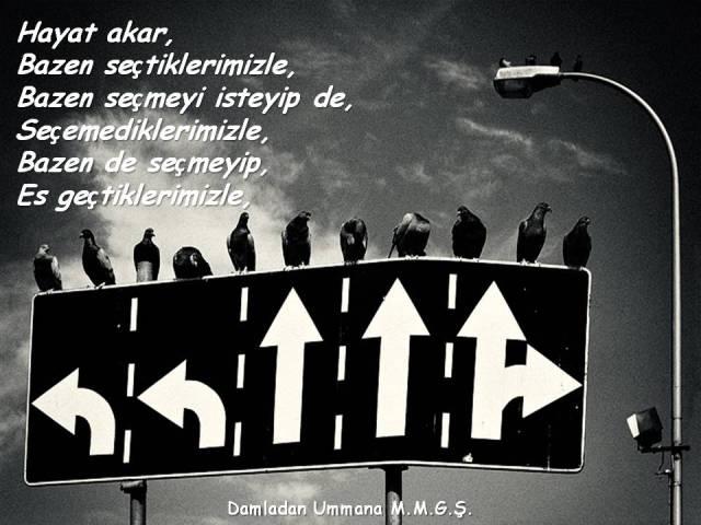 Akar 01